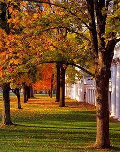 University of Virginia Lawn