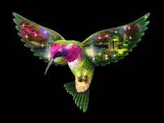 Wallpaperformobileorg 16114 Hummingbird Wallpaper For Android