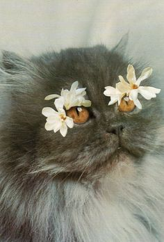 Chicago-based artist Stephen Eichhorn combines images of cats with flowers, cacti, shells and minerals. 200 of his cat collages have been Crazy Cat Lady, Crazy Cats, I Love Cats, Cute Cats, Cat Plants, Image Chat, Cat Flowers, Pretty Cats, Pretty Kitty