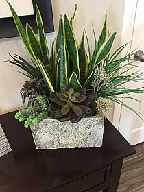 Beauty Succulents Pots Arrangement Tips 39 « Garden Decor Succulent Gardening, Container Gardening Vegetables, Succulents In Containers, Succulent Pots, Container Plants, Cacti And Succulents, Planting Succulents, Planting Flowers, House Plants Decor