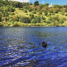 Sunday init. #cockerspaniel #cockersofinstagram #blueroan #dogswimming
