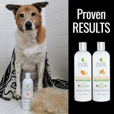 Shed Control Shampoo (Sweet Orange & Coconut) Reduce shedding, dander and allergens with our Shed Control Shampoo. Made with Sweet Orange, Coconut Oil and Omega 3 Fatty Acids to moisturize and improve skin. Calendula Oil, Open Hairstyles, Dog Shedding, Orange Oil, Organic Coconut Oil, Natural Solutions, Shampoo And Conditioner, Doggies, Essentials