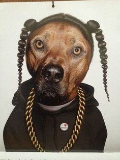 Funny pictures about Snoop Dogg Dog. Oh, and cool pics about Snoop Dogg Dog. Also, Snoop Dogg Dog photos. Snoop Dogg, Chien Halloween, Dog Halloween, Pitbull Halloween Costumes, Pitbull Costumes, Funny Dogs, Funny Animals, Cute Animals, I Love Dogs