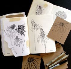 Deborah Velásquez: Echinacea flower studies, Art Everyday Day Nine • Flower Sketches.