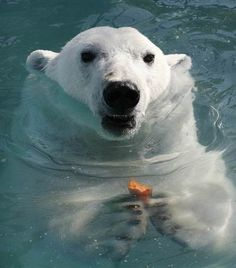 Ilya Naymushin / Reuters via Animal Tracks ~ Snack time