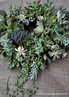 Succulent Wreath Tutorial- for those of us NOT blessed to live in a climate where they are hardy!