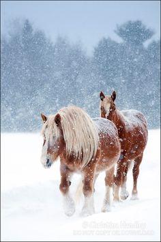 Snow horses - ©Christina Handley - www.christinahandley.com/portfolio/horses.php#8