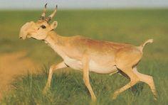 21-animaux-inhabituels-dont-vous-nauriez-jamais-soupconne-lexistence13