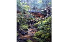 Forest Bridge by Jack Paluh Nature Artwork, Natural World, Bridge, Scenery, River, Artist, Outdoor, Outdoors, Art In Nature