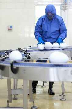 """Real Foods VS Conveyor Belt Foods: here, an engineerinspects genetically modified eggs on a production line. See, """"Why You Should Start Eating Real Food Again"""" http://www.bestsmoothie.recipes/blog/avoid-synthetic-chemicals-in-your-daily-diet"""