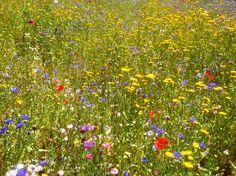 Wild Flower Garden Brompton Finch