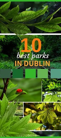 The Best Ticket for Great outdoors Dublin Attractions, Free Things To Do, Good Things, Shades Of Green, Parks, Stuff To Do, Ireland, Top, Outdoor