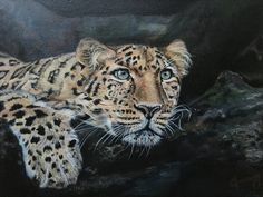 """My painting in acrylic entitled """"all seeing, all knowing. All Seeing, Panther, Artworks, Painting, Animals, Animales, Animaux, Panthers, Painting Art"""