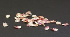 fairest flowers farm: gomphrena confetti