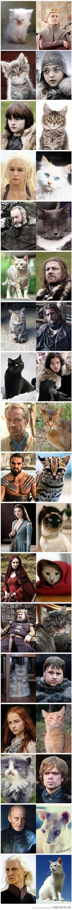 Ha ha!!  If the cast of Game of Thrones was replaced with cats…