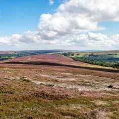 The search for the North Yorkshire Moor Red Grouse - http://www.petes-photoworld.co.uk/2016/10/05/the-search-for-the-north-yorkshire-moor-red-grouse/
