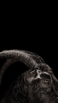 Black Wallpaper: horror mobile background the witch Horror Wallpaper 3d, Witchy Wallpaper, Dark Wallpaper, Mobile Wallpaper, Arte Horror, Horror Art, Horror Movies, The Witch 2016, Preto Wallpaper
