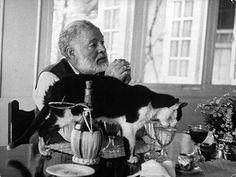 Ernest Hemingway et son chat qui se fait une petite rasade dans son verre. J'adore ces photos de chats sur les tables,je vois que je ne suis pas la seule à en avoir un qui fait partie des couverts!
