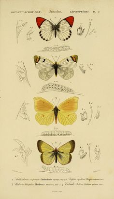 n174_w1150 by BioDivLibrary, via Flickr