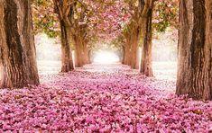 Caminho de flores (Local desconhecido)