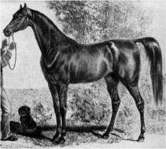 Tajar, 1851
