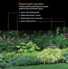 Another gold-themed vignette includes golden hostas and Hakone grass.      1  Hosta 'Jack of Diamonds'    2  Filipendula ulmaria 'Aurea'    3  Hakonechloa macra 'Aureola'    4  Hosta 'Little Aurora'