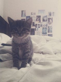 Huey kitten look-a-like.