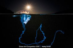 This year may have been a rough one up here on Earth's dry surface, but beneath the waves ocean life flourished and dazzled. The world's most prestigious underwater photography competition has just announced its winning images for 2016—and they're absolutely spellbinding.