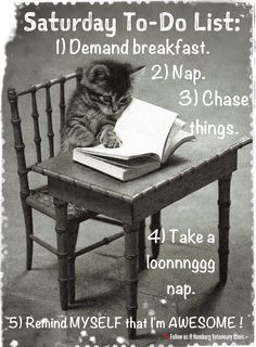Saturday humor   Relax   Things to do list   Animal funny   Cute cat: I know what I'm doing this Saturday!  What are your plans?