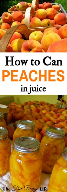 Canning Peaches in Juice- No Sugar Added! Preserve peaches at home! Learn how to can peaches in juice to preserve them all year long! Preserve peaches at home! Learn how to can peaches in juice to preserve them all year long! Canning Tips, Canning Recipes, Canning Food Preservation, Preserving Food, Preserving Peaches, Canning Peaches, Canned Food Storage, Dehydrated Food, Fruits And Veggies