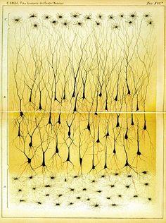 Estimulación estética de nuestras neuronas en un espejo digital: Imágenes microscópicas, ilustraciones, visualizaciones y representaciones artísticas del cerebro nos muestran la naturaleza protéica del órgano más complejo del universo conocido.