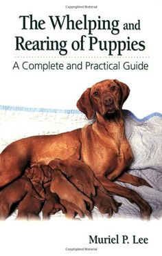 Newborn Puppy Care, Newborn Puppies, Whelping Puppies, Whelping Box, Loyal Dog Breeds, Puppy Supplies, B 13, Dog Agility, Yorkie