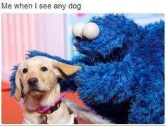Me When I See Any Dog | Mega Memes LOL!