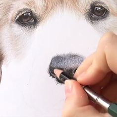 Tiny little clip of the nose in progress! I always love drawing dog noses. The biggest challenge is getting that shine in there and all the… Cool Art Drawings, Animal Drawings, Pencil Drawings, Art Sketches, Colored Pencil Artwork, Pencil Painting, Color Pencil Art, Polychromos, Nose Drawing