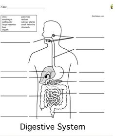 free digestive system diagram brighteyed for science pinterest diagram body systems. Black Bedroom Furniture Sets. Home Design Ideas