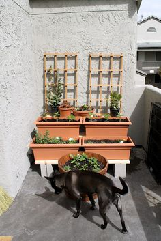 Kate's Short and Sweets: Creating a Small Space Balcony Container Garden Small Space Gardening, Small Gardens, Outdoor Gardens, Grey Gardens, Garden Planters, Balcony Garden, Balcony Ideas, Pallet Planters, Garden Junk