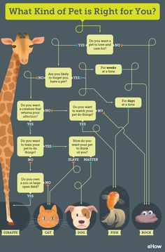 Decision tree about how to choose the right pet for you