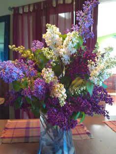 lilac from Illinois Willow