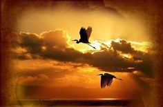 Svetová vojna na spadnutie? Bald Eagle, Statues, Blog, Animals, Day Planners, Animales, Animaux, Effigy, Blogging