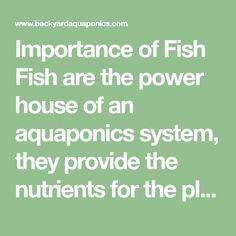 Importance of Fish Fish are the power house of an aquaponics system, they provide the nutrients for the plants and if your growing edible fish, then they also provide protein for yourself. Keeping fish may be a little daunting to some, especial [...]