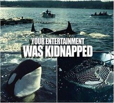 SeaWorld kidnaps babies from their mother's. Do not buy a ticket.