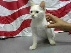 www.PetHarbor.com pet:MRVL.A451205