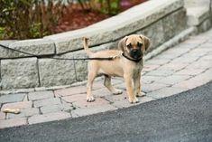 how to train your puppy off leash