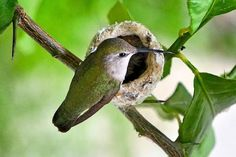 Guarding the Nest photo by David Herholz — National Geographic Your Shot