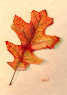 De+Paulo+Oak+leaf.JPG (226×320)