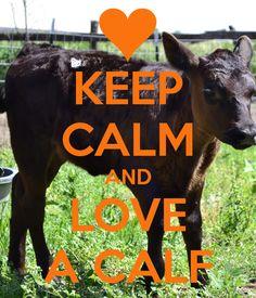 KEEP CALM AND LOVE A CALF <3