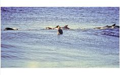 Jeff Divine Surf Photography 1980'