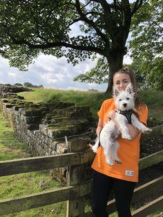 Barbour Tartan Dog Harness Doggy Dog Harness Dogs Tartan