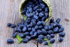 As huckleberries are loaded with vitamins, there are several health benefits associated with them. In this article, you will find information on the medicinal uses of huckleberries. Diabetic Recipes, Healthy Recipes, Dorothy Day, Bakery Cakes, Huckleberry, Superfoods, Soul Food, Health Benefits, Blueberry