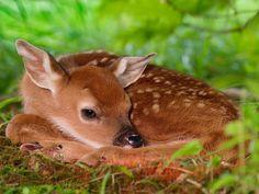 ¿Se trata de animales y paisajes hermosos?